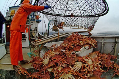 Russia Says Volume of King Crab in Barents Sea May Equal Far East in a Few Years; Cod Catches Drop