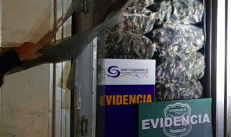 Chile: 8.1 Tons of Mussels Found Hidden in Dairy Truck