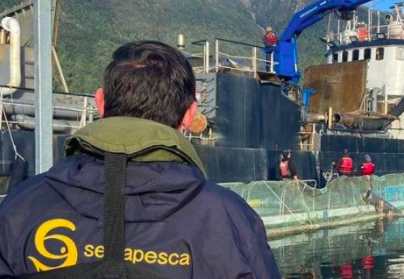 Chile Algae Bloom Update: Mortality Removal Continues in Los Lagos Region
