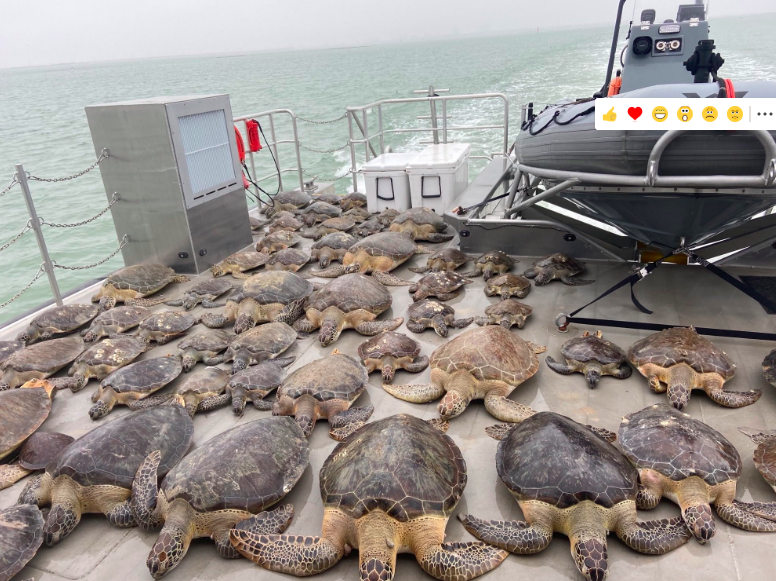Thousands Of Cold-Stunned Sea Turtles Rescued, but Texas Cold and Power Outages Continue