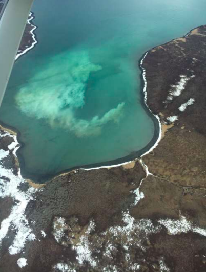 Togiak Sac Roe Herring Season Opened Monday with Highest Forecast in 30 Years