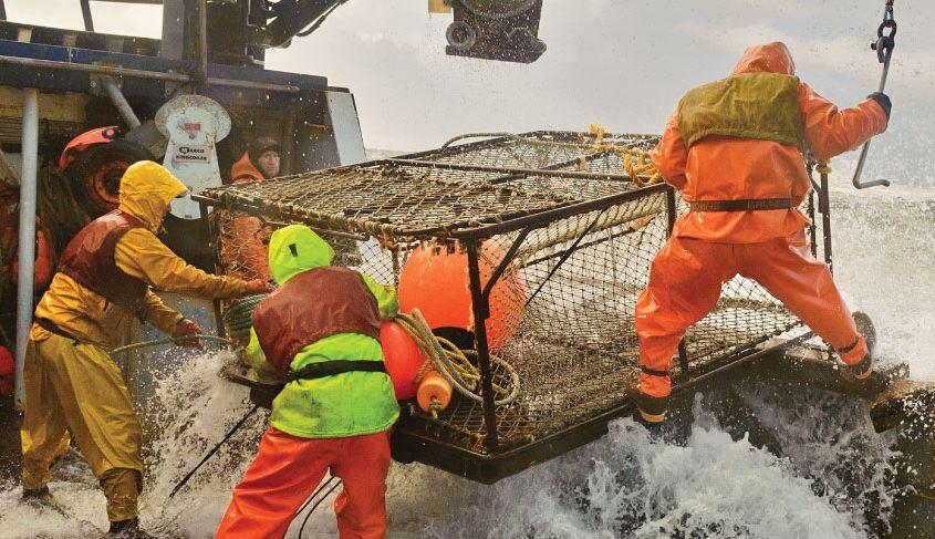 Impacts of Acidic Oceans Revealed on Key Alaska Species