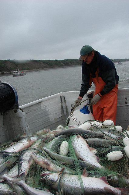 Fish Prices for Alaska Show Mostly Increases in 2017