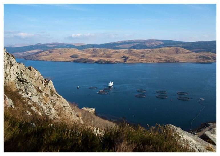 Bakkafrost to Invest $985 Million in Growth, Scottish Operation Improvements