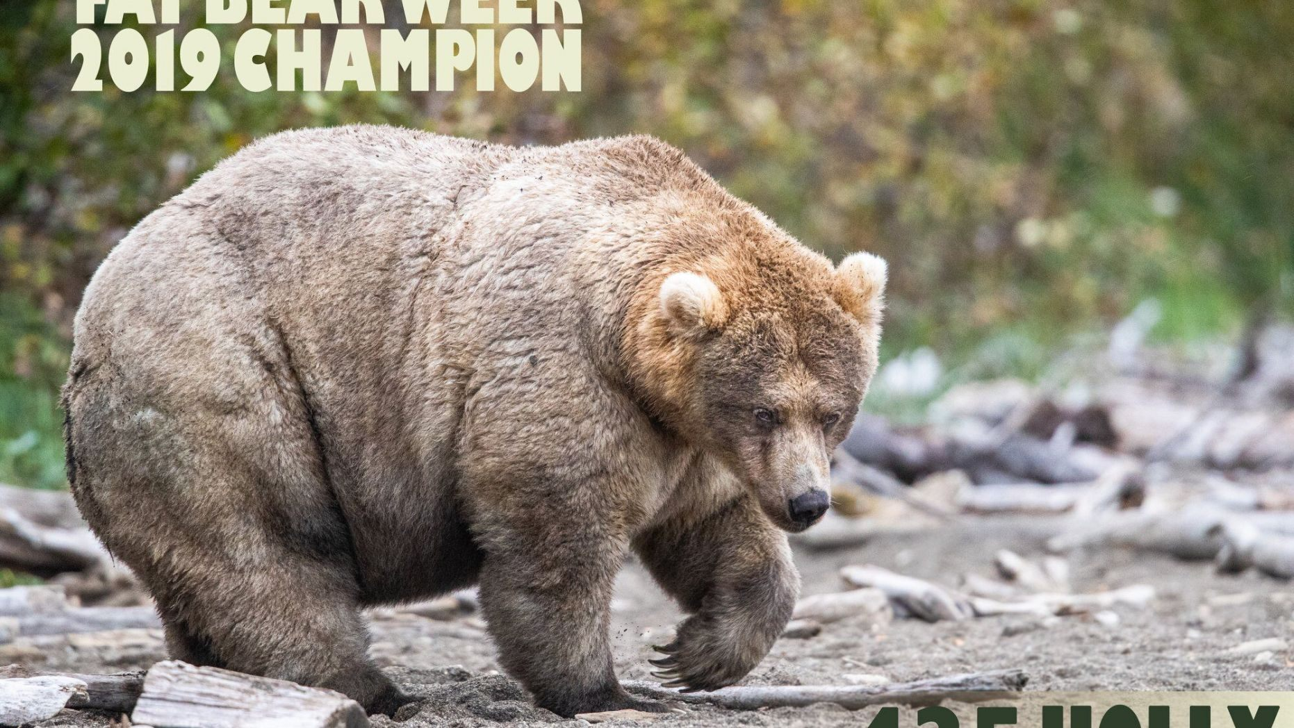 Fat Bear Week is Over but Pebble Mine Threat Continues