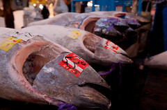 Japan to Propose Bluefin Tuna Catch Quota Increase At WCPFC Meeting