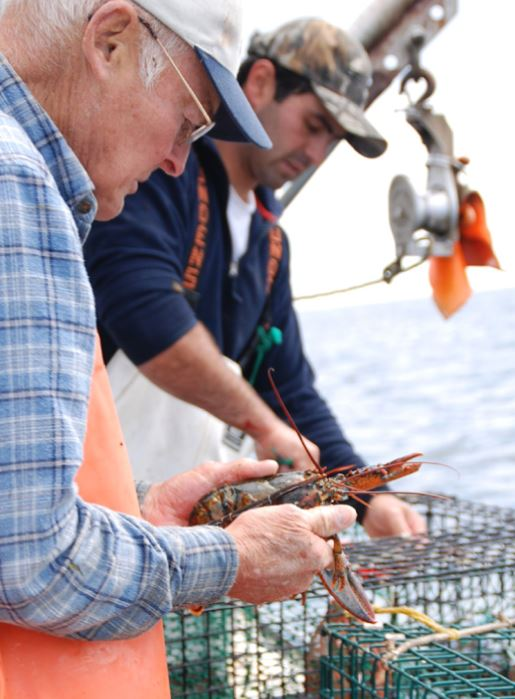 CAP Report: Vulnerable Lobster and Oyster in New England, More 'Funny Fish' in Mid-Atlantic