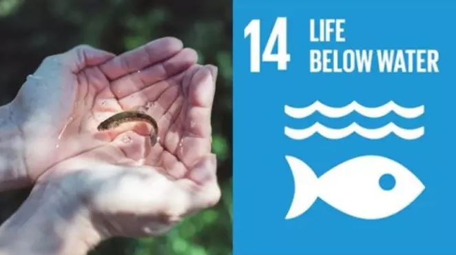 Cermaq Welcomes Launch of UN Action Platform for Sustainable Ocean Business