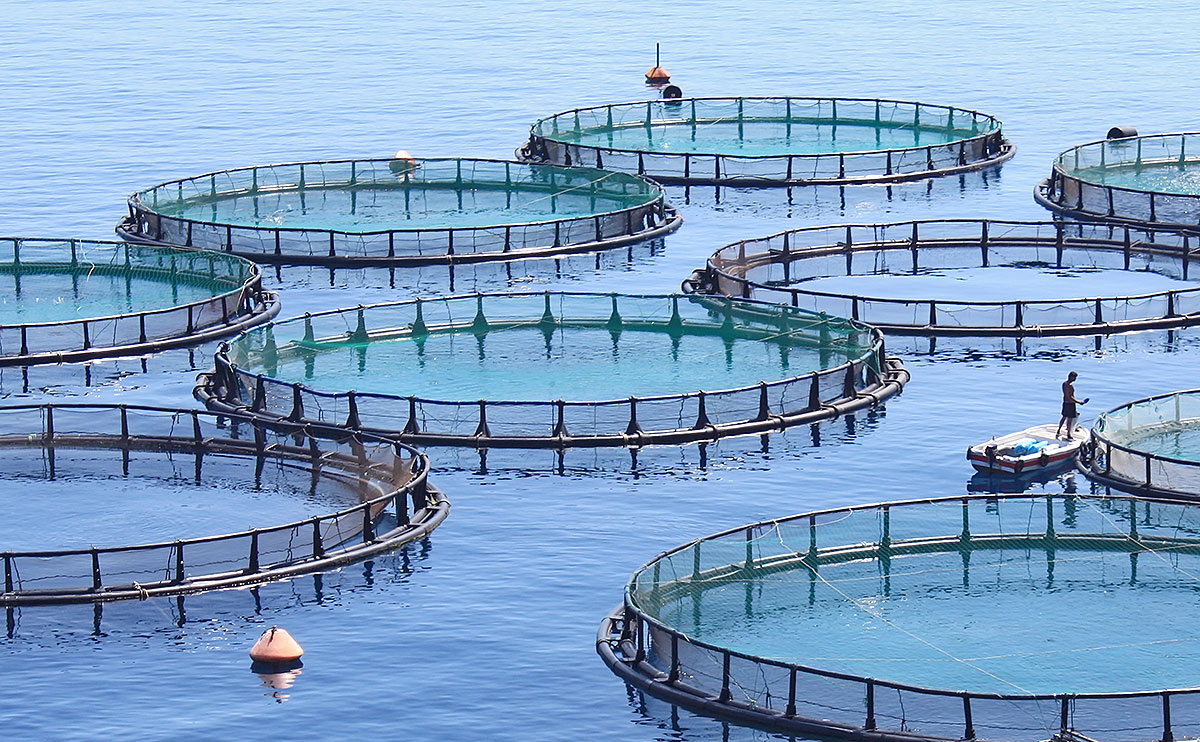 Green Island Salmon and its Norwegian Partners Plan 3 New NL Salmon Farms