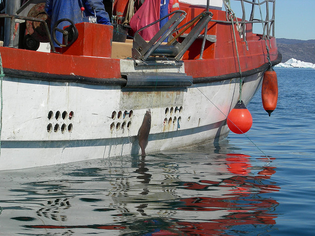 Canadian Industry Associations Seeking MSC Certification For Greenland Halibut Fishery