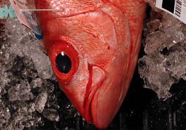 Federal Managers Increase Catch Limits in Hawaii Deep-Water Bottomfish