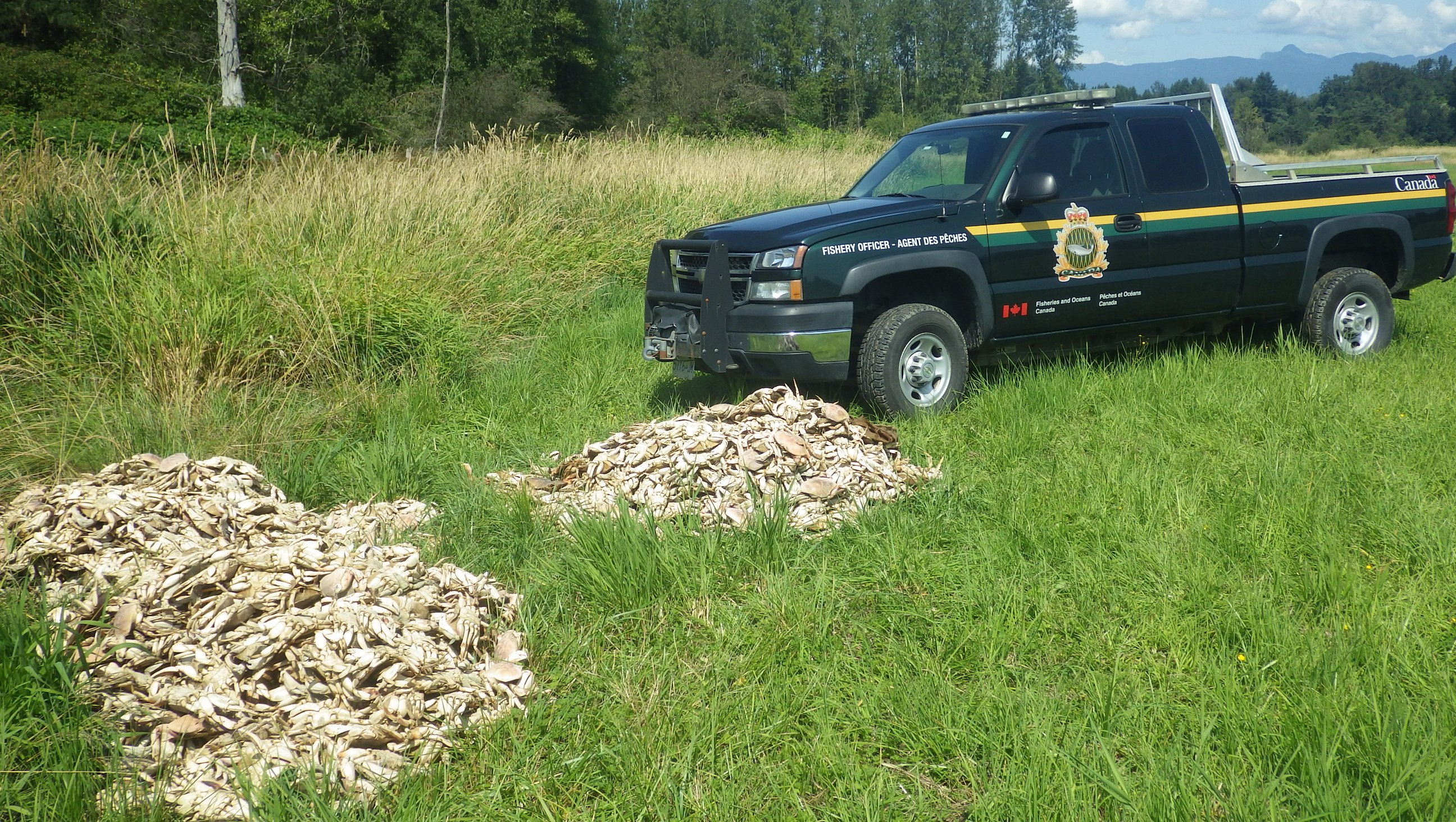 DFO Launches Investigation of Illegal Dumping of 1,500 lbs. of Crab in Maple Ridge, B.C.