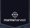 Marine Harvest Attempting to Catch Antibiotic-Treated Salmon After Escapement