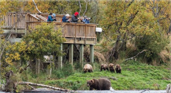 Alaska's Bear-Viewing Industry Threatened by Pebble Mine