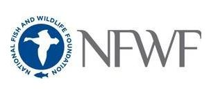 National Fish and Wildlife Foundation Announces Grants to Reduce Lost and Abandoned Fishing Gear