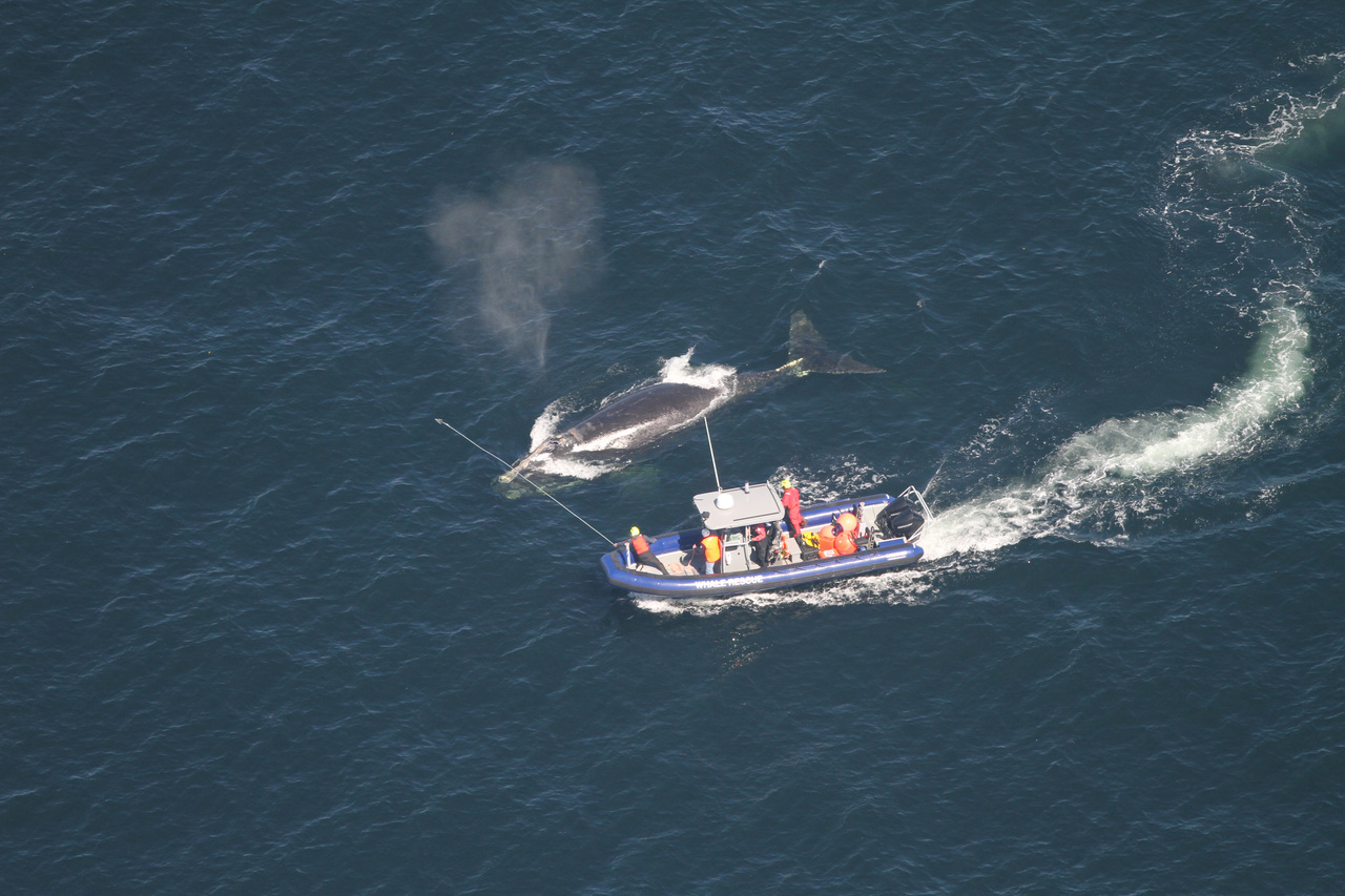 How a NOAA Aerial Whale Survey Team Aided Canadian Rescuers in Effort to Disentangle Right Whale