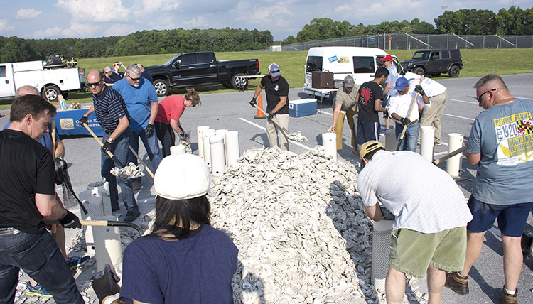 Perdue, Oyster Recovery Partnership Team Up to Restore Chesapeake Bay's Oyster Population
