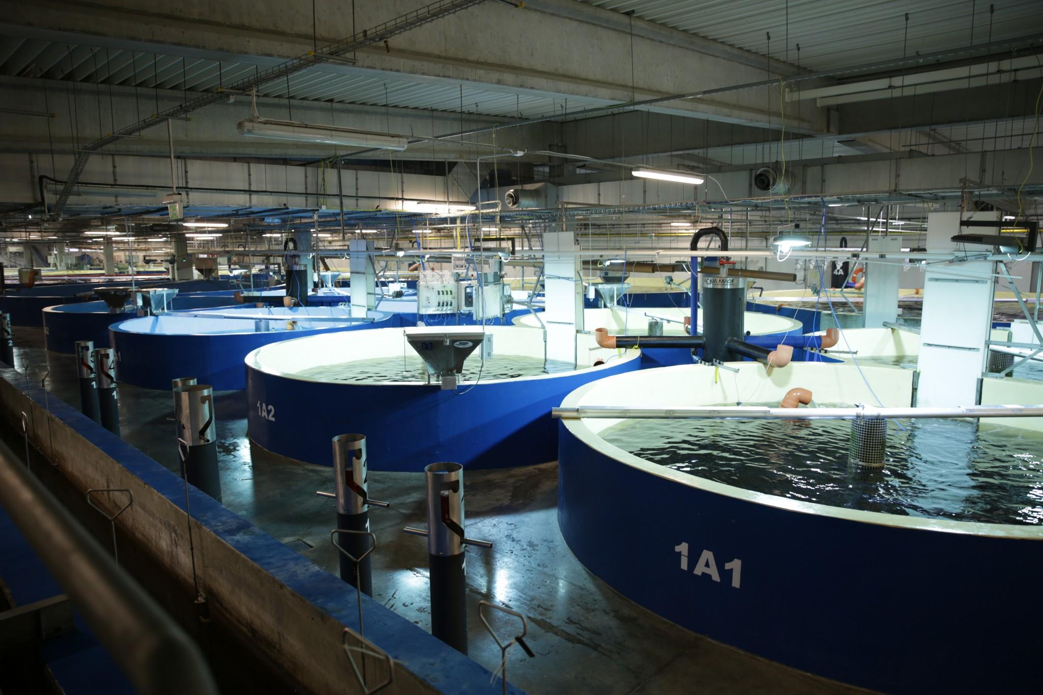 Land-based Farm Pure Salmon Poland Earns Ocean Friendly Label