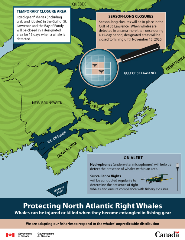 Oceana: Canada's New Right Whale Protections Step in Right Direction but More Action is Needed