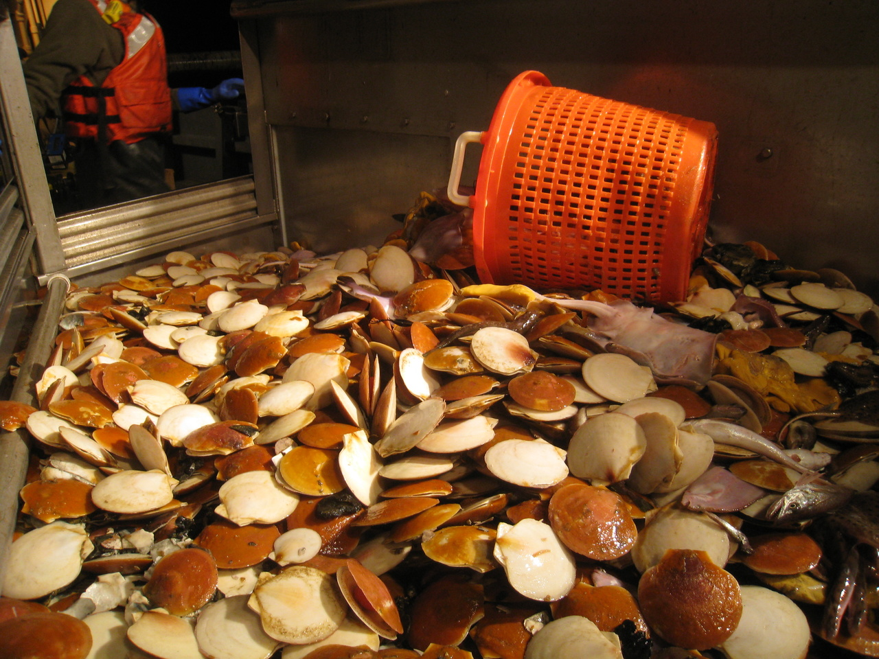 NOAA Adds MRAG Americas as Provider to Sea Scallop Observer Program