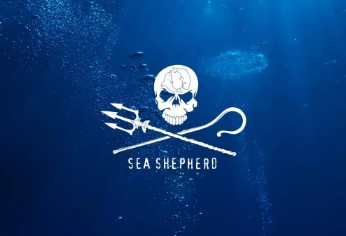 Sea Shepherd Launching Web Series to Document Efforts to Save Endangered Vaquita