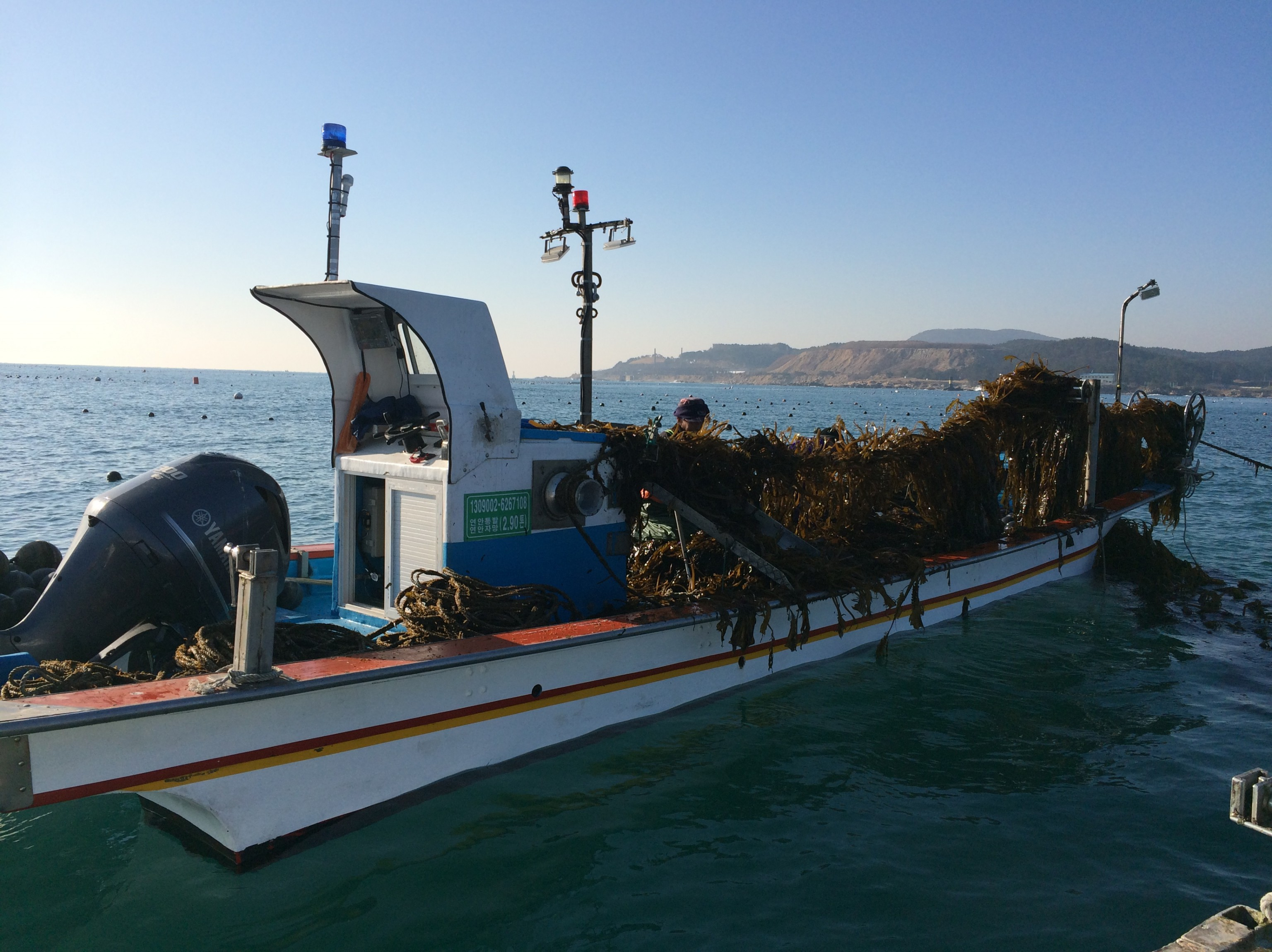 Seaweed Farm Becomes First of its Kind to Earn ASC-MSC Certification
