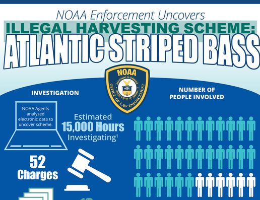 INFOGRAPHIC: NOAA Law Enforcement Uncovers Illegal Atlantic Striped Bass Harvesting Scheme