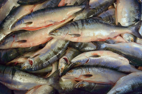 Russia Plans to Process 80% of Domestic Fish Catch by 2030
