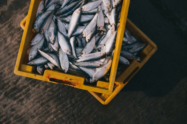 Tradewind Closes Deal for $6 Million Export Factoring Facility for China-Based Seafood Processor