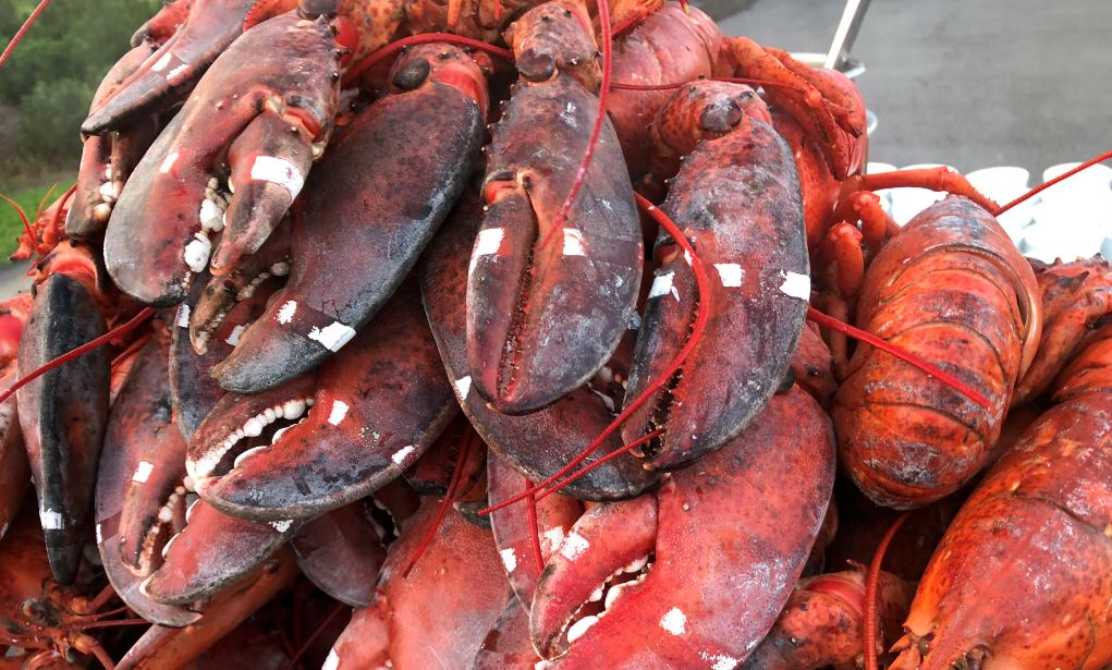 Boston Lobster Price Increases Dramatically in Beijing