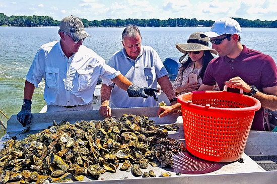 U.S. Universities Net $10 Million Grant to Accelerate Sustainable Shellfish Aquaculture