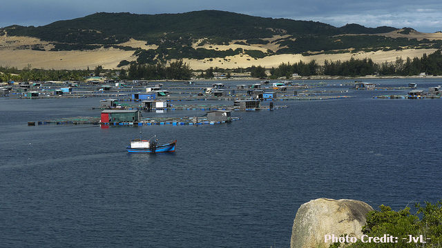 Vietnam Shrimp Farmers Slow Aquaculture Due to Plummeting Prices